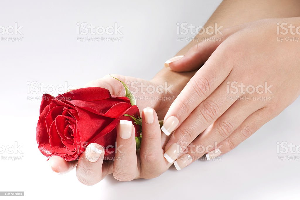 Woman hands with red rose royalty-free stock photo