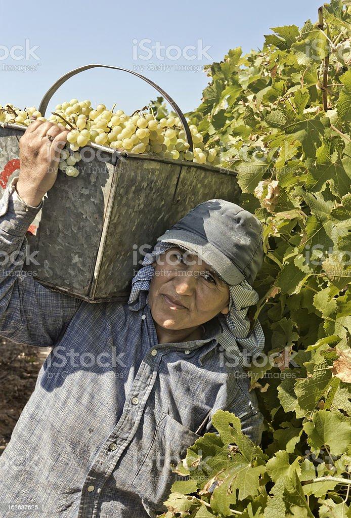 Woman harvester royalty-free stock photo