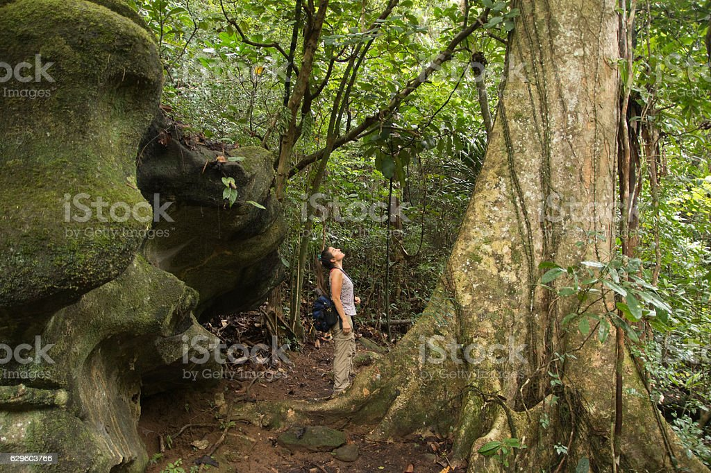 Woman hikes Nosy Mangabe Island Reserve rainforest Madagascar stock photo