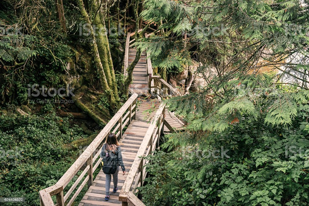 Woman Hiking Green Rainforest Tofino National Park Vancouver Island Canada stock photo
