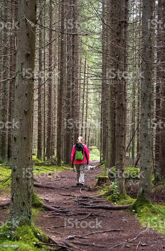 Woman hiking in forest path stock photo