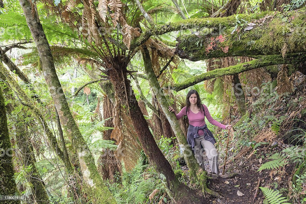 Woman hiking in the rainforest stock photo