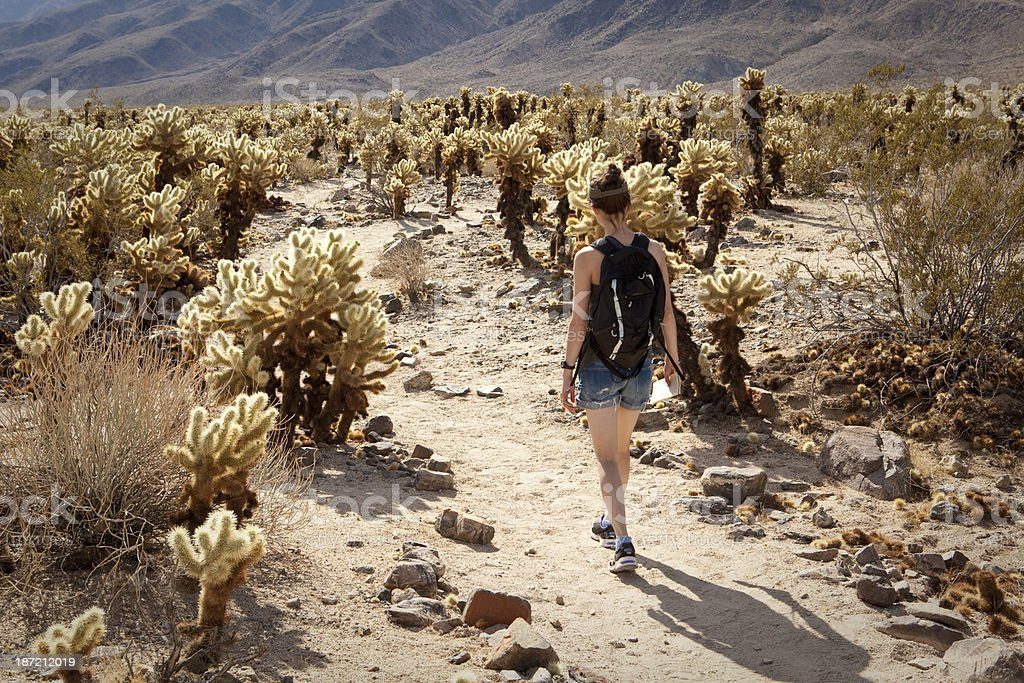Woman hiking through cholla garden in Joshua Tree National Park royalty-free stock photo
