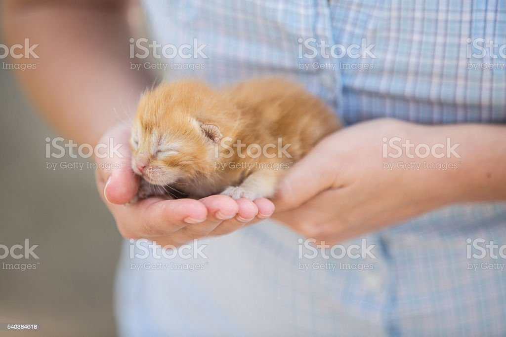 woman holding a baby  kitten stock photo