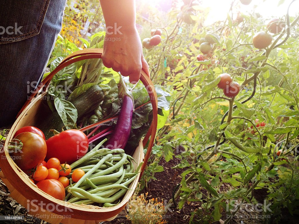 Woman holding a basket filled with vegetables stock photo