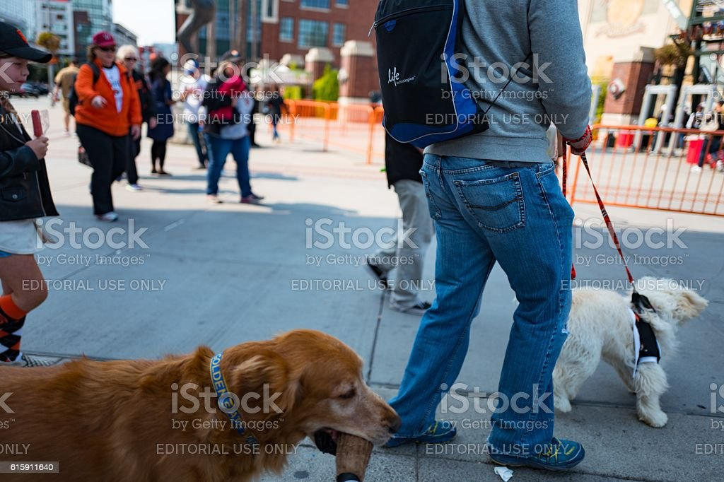 Woman Holding A Dog On A Leash stock photo