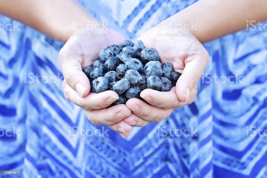 Woman Holding Blueberries royalty-free stock photo