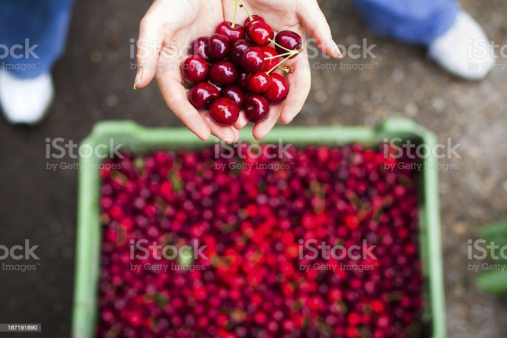 Woman holding cherry royalty-free stock photo