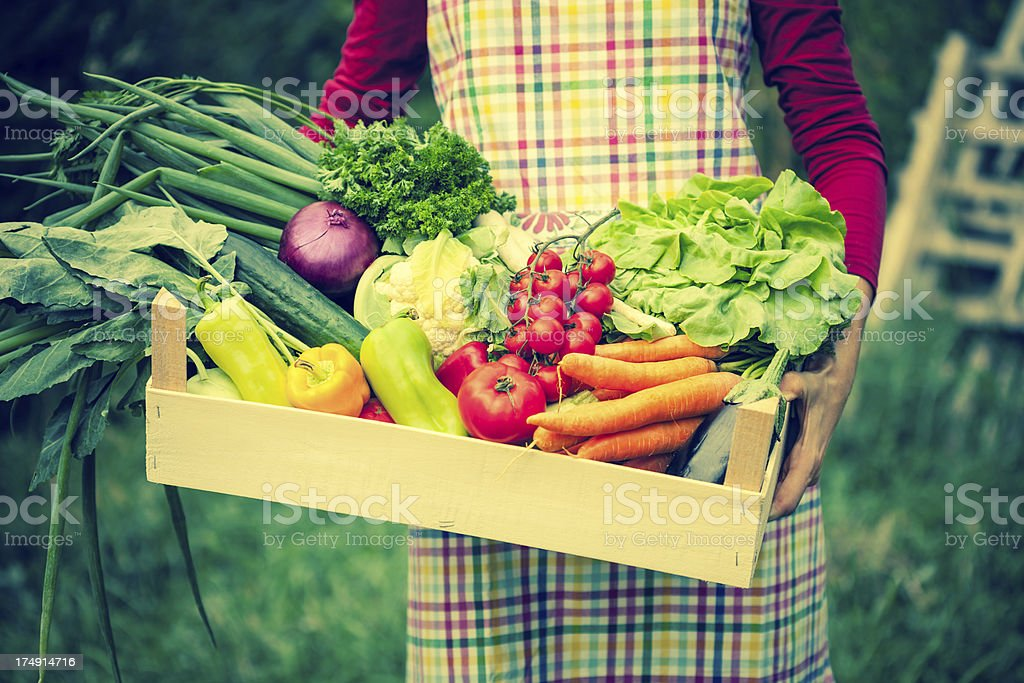 Woman holding crate of fresh vegetables royalty-free stock photo