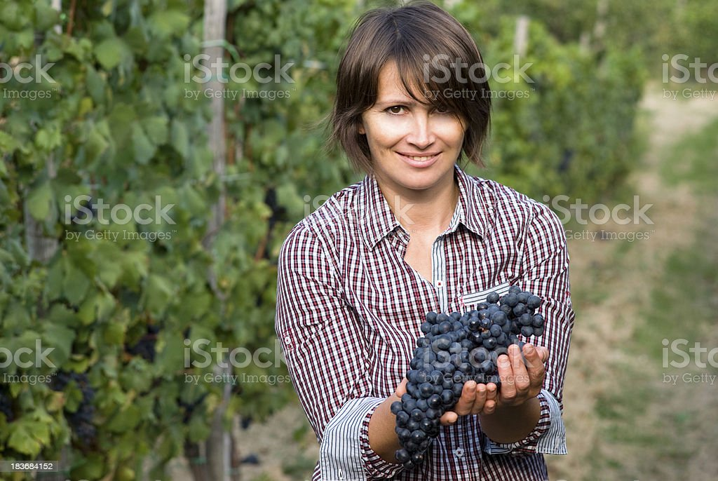 Woman holding deep violet colored grapes in wine vineyard stock photo