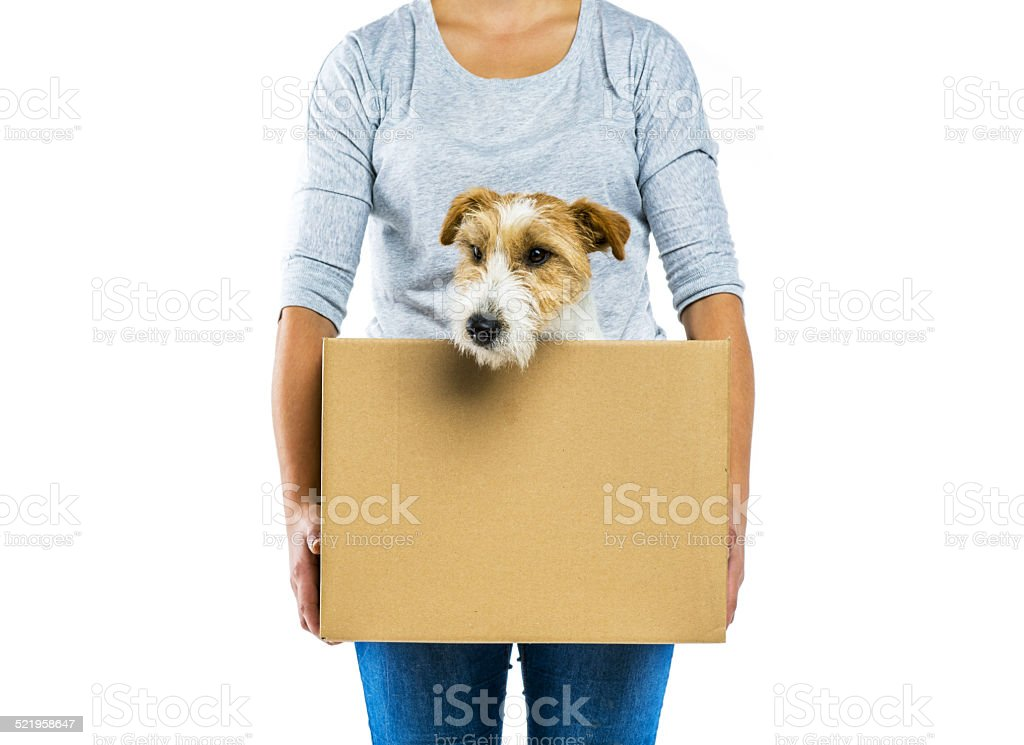 Woman holding dog in box isolated stock photo