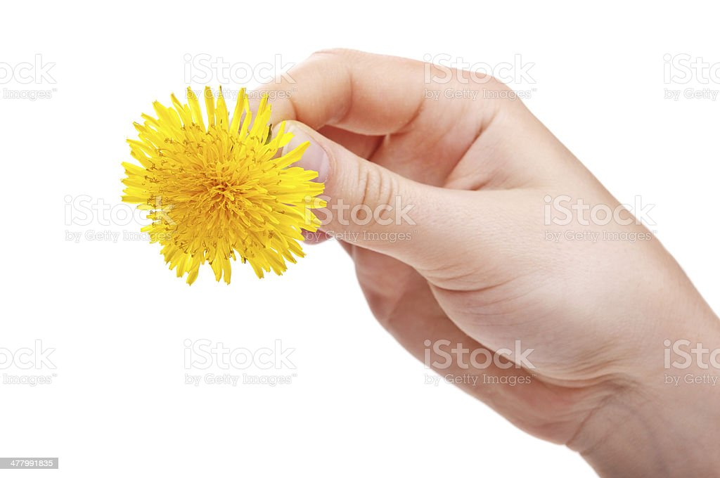 woman holding flower royalty-free stock photo