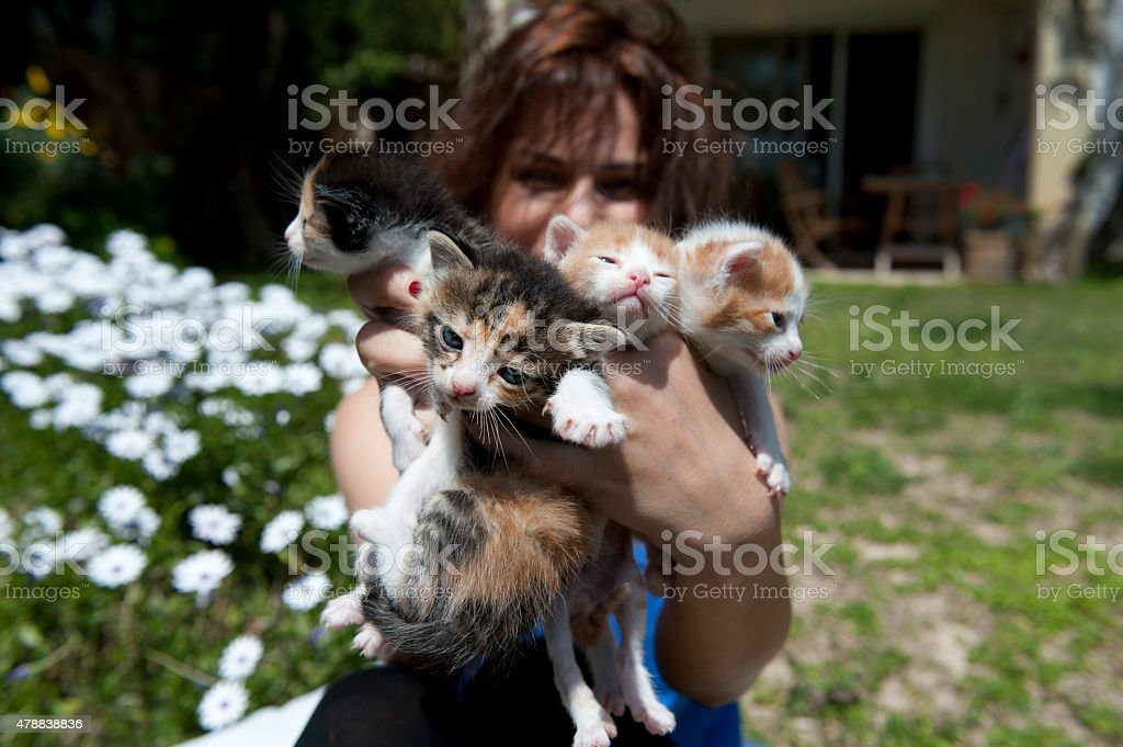 Woman Holding Four Kittens stock photo