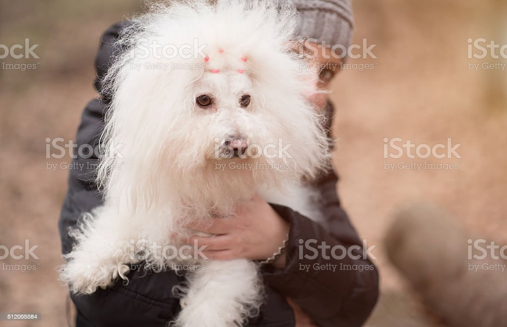 Woman holding her puppy stock photo