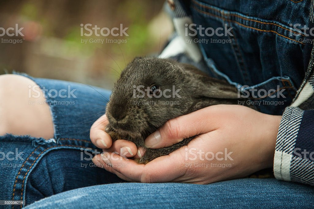 Woman holding little cute rabbit close up stock photo