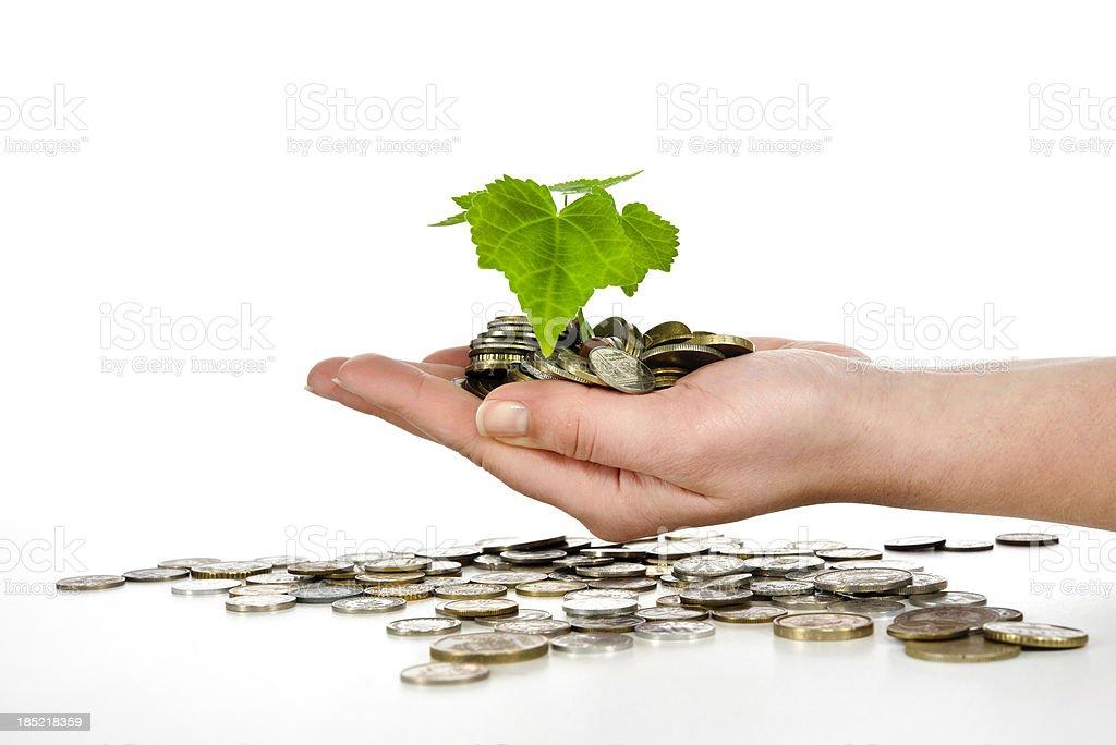woman holding money tree stock photo