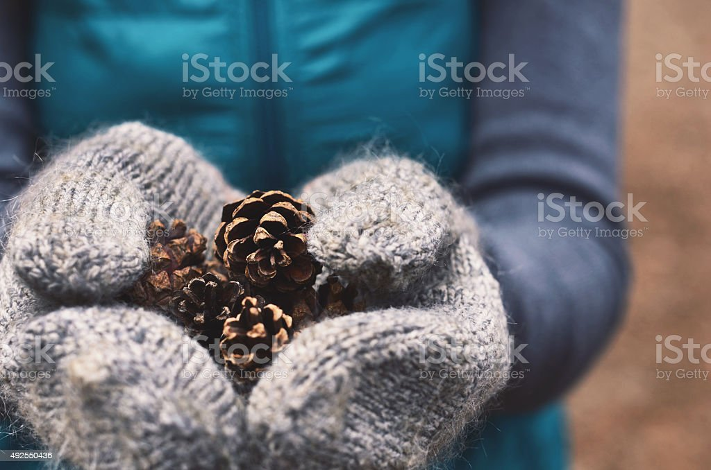 Woman holding pine tree cones in woolen mittens, close up stock photo