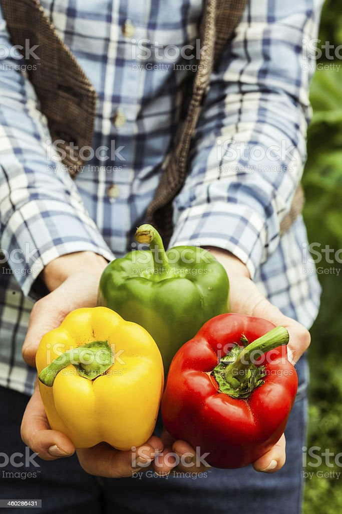 Woman holding three colourful peppers stock photo