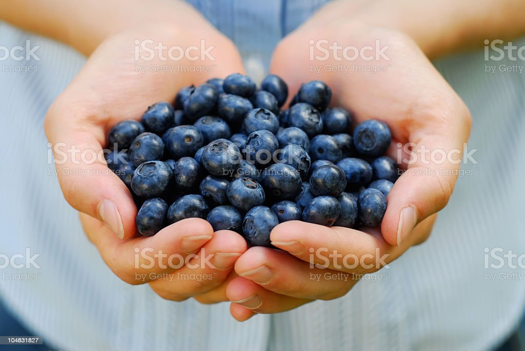 Woman holding two hands full of blueberries stock photo