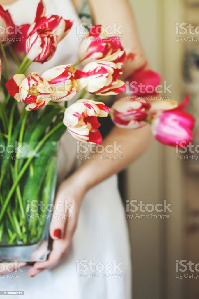 woman holds a vase with a large bouquet of fresh pink tulips stock photo