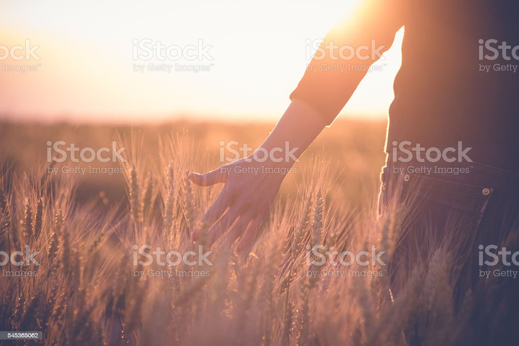 Woman in a wheat field in the sun stock photo