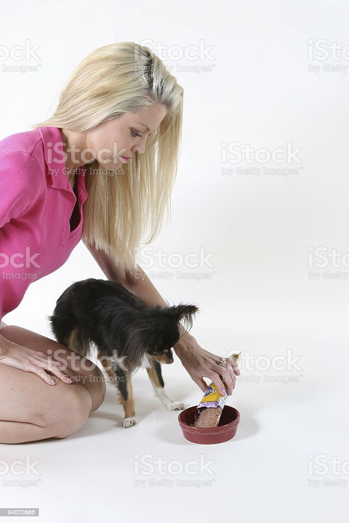 Woman in bright pink feeding her Chihuahua dog royalty-free stock photo