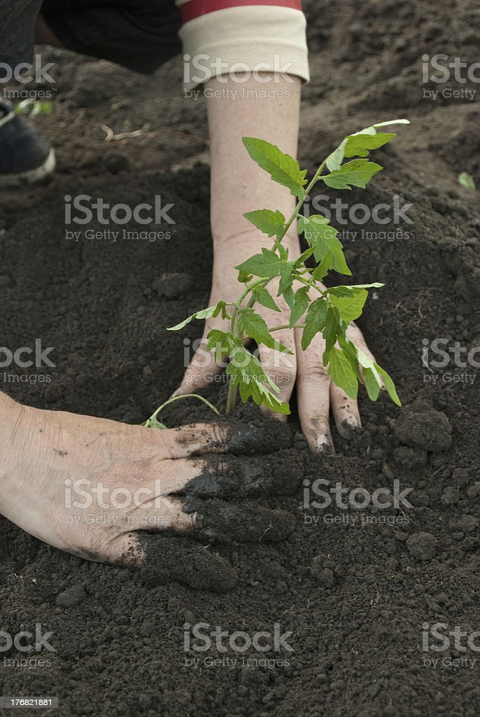 Woman in Field royalty-free stock photo