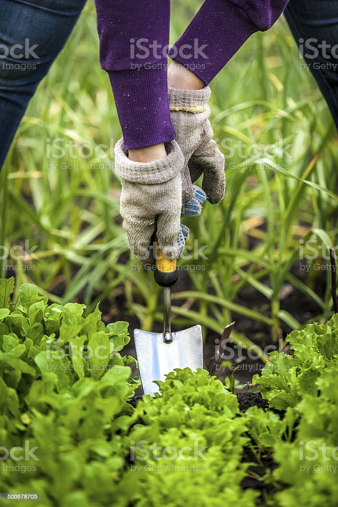 woman in gloves working with small shovel on garden bed stock photo