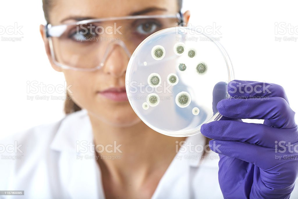 Woman in lab coat and glove checking bacteria in petri dish royalty-free stock photo