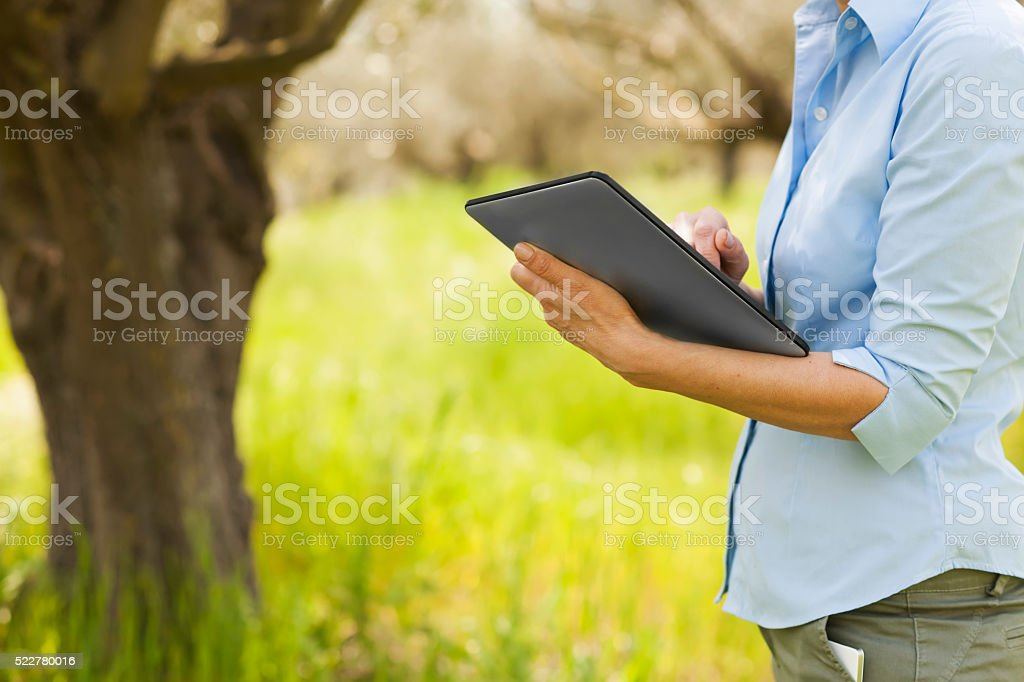 Woman in olive plantations stock photo