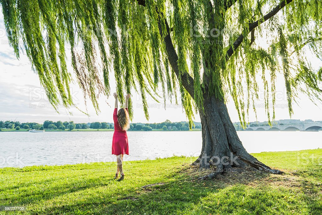 Woman in red dress reaching to willow tree and wind stock photo