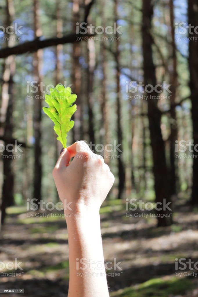 Woman in the forest. stock photo