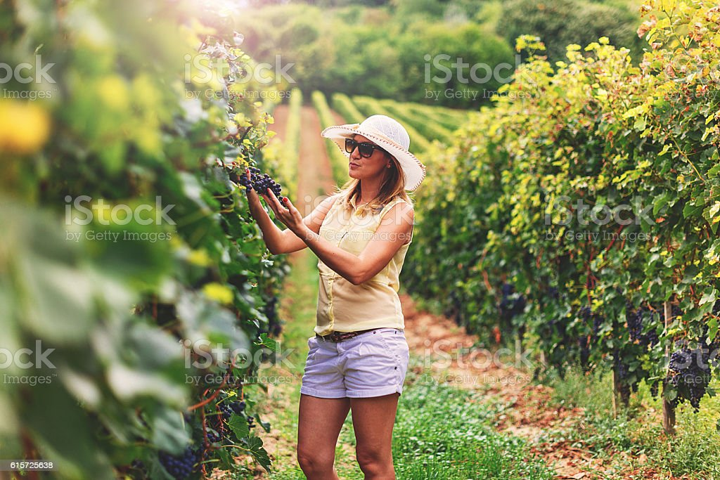Woman in vineyard in Central Europe stock photo