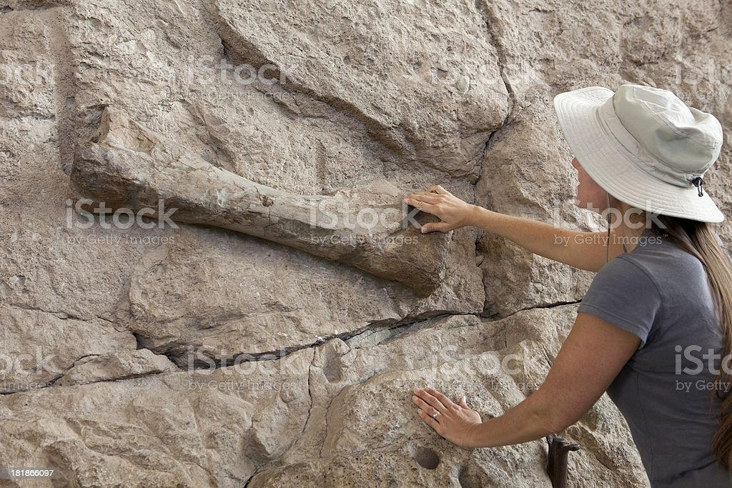 Woman inspects fossil bone Dinosaur National Monument Utah stock photo