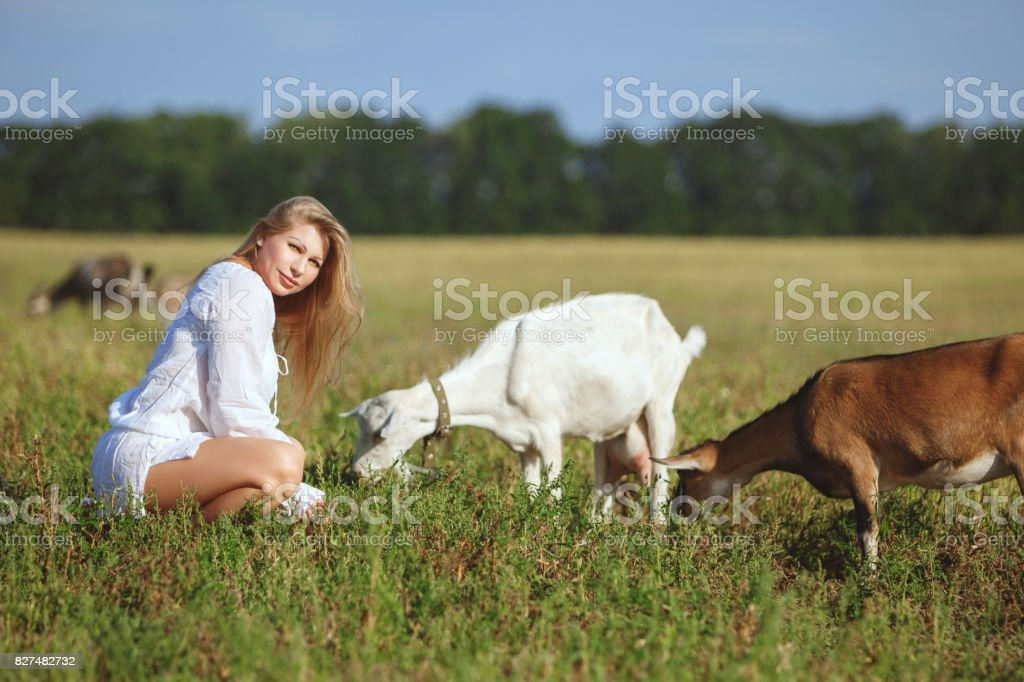 Woman is feeding goats in a field. stock photo