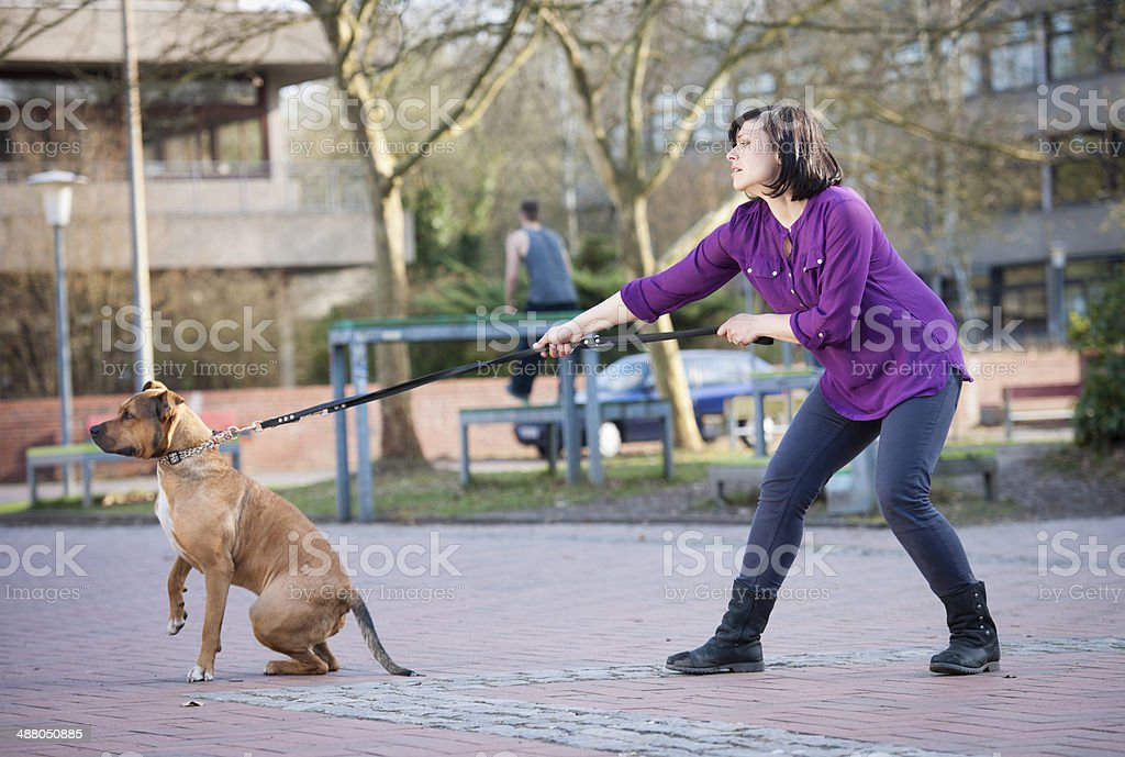 Woman is walking with dog stock photo