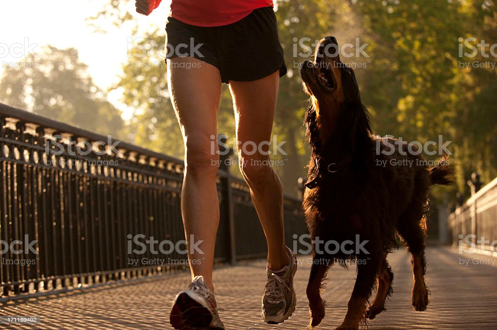 Woman jogging in the park with dog stock photo