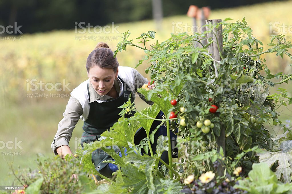 Woman kneeling in kitchen garden royalty-free stock photo