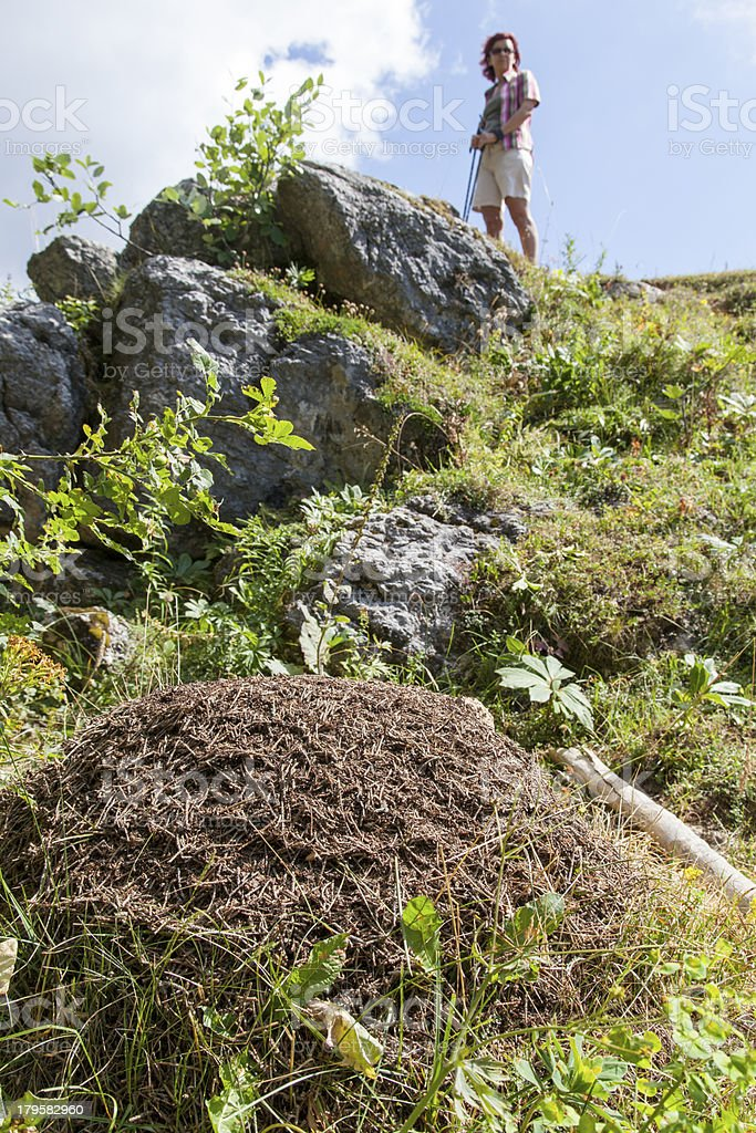 Woman looking big anthill in the mountains royalty-free stock photo