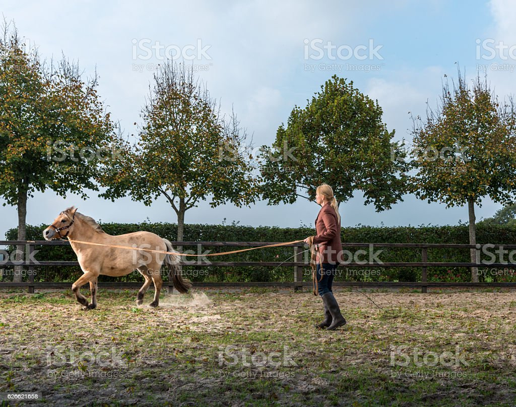 woman lunging horse stock photo