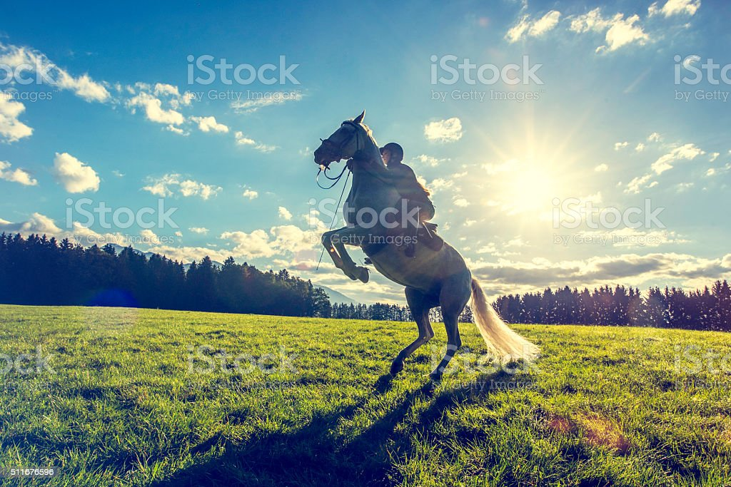 Woman on a rearing white horse stock photo