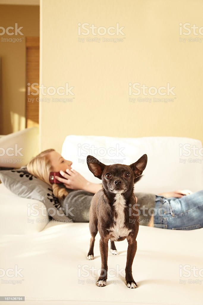 Woman on phone with dog in foreground stock photo