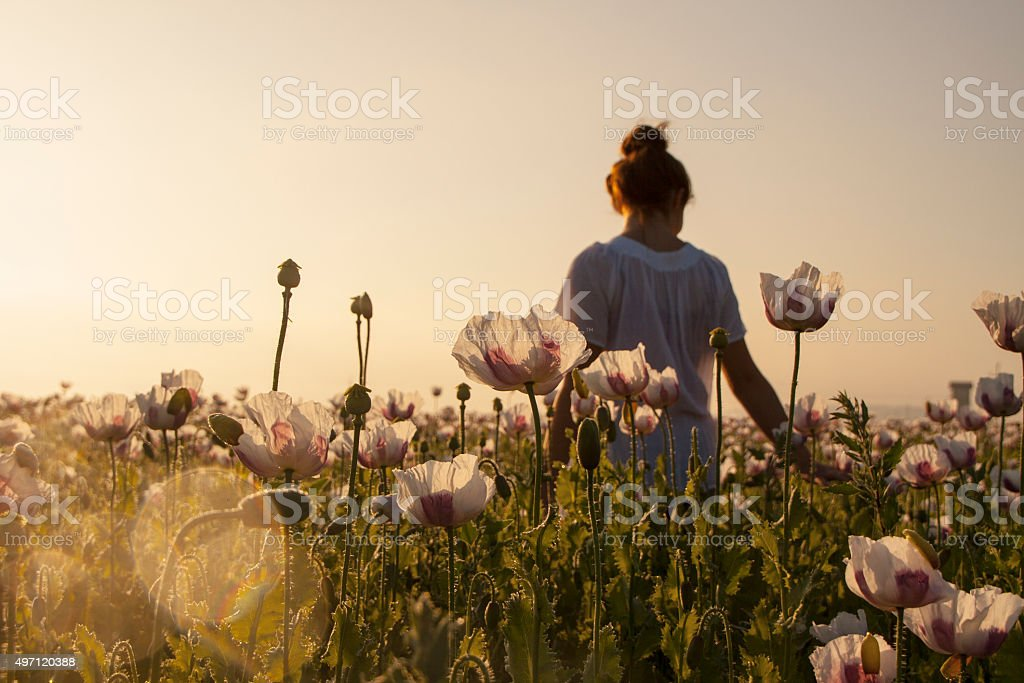 Woman on the field of the poppy flowers stock photo