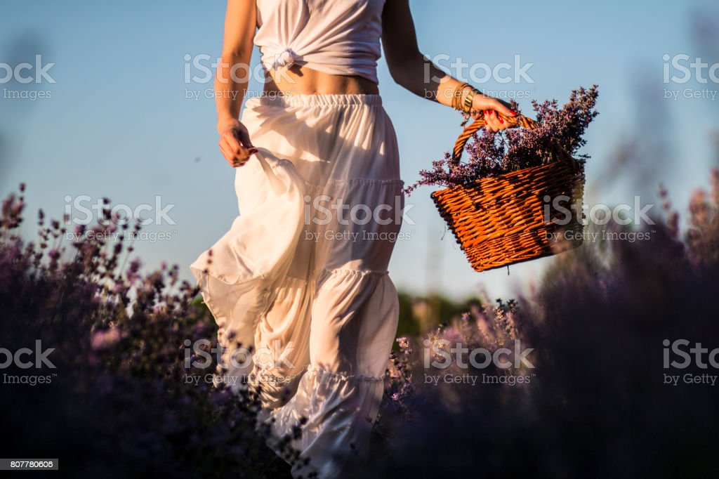 Woman on the meadow of lavender stock photo