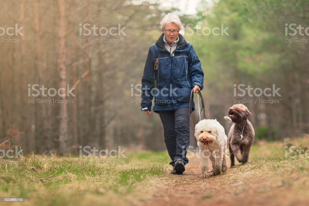 Woman out walking two dogs in a forest stock photo