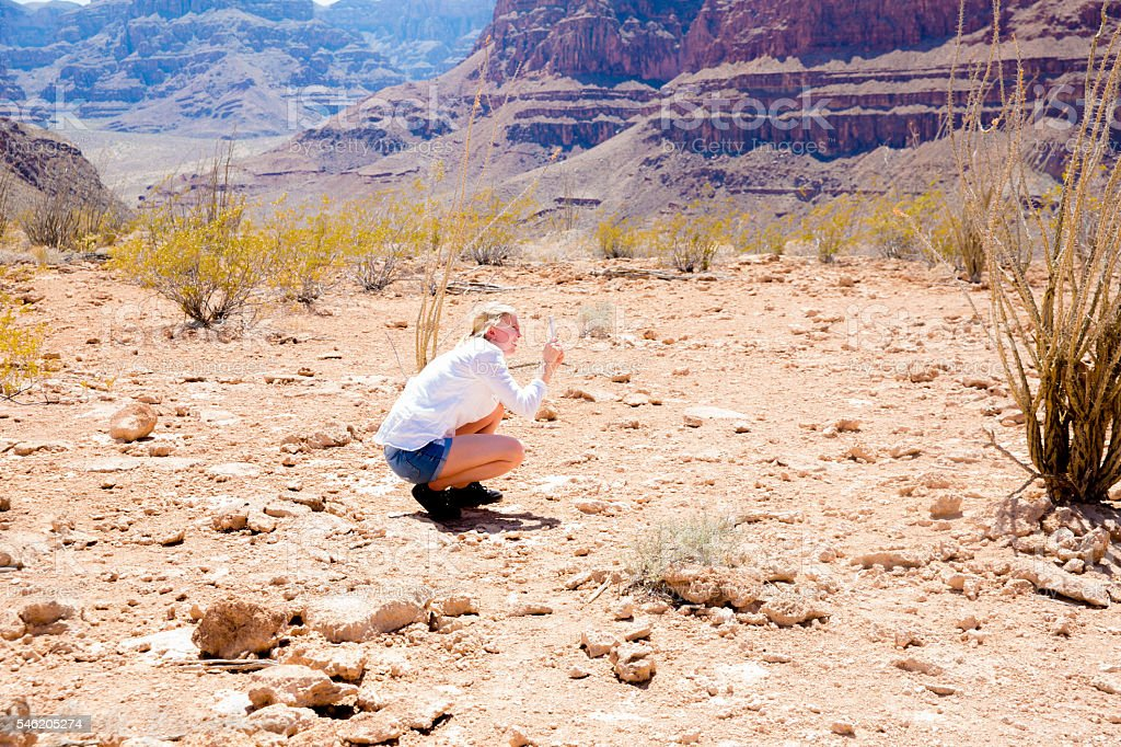 Woman photographing cactus in the Grand Canyon stock photo