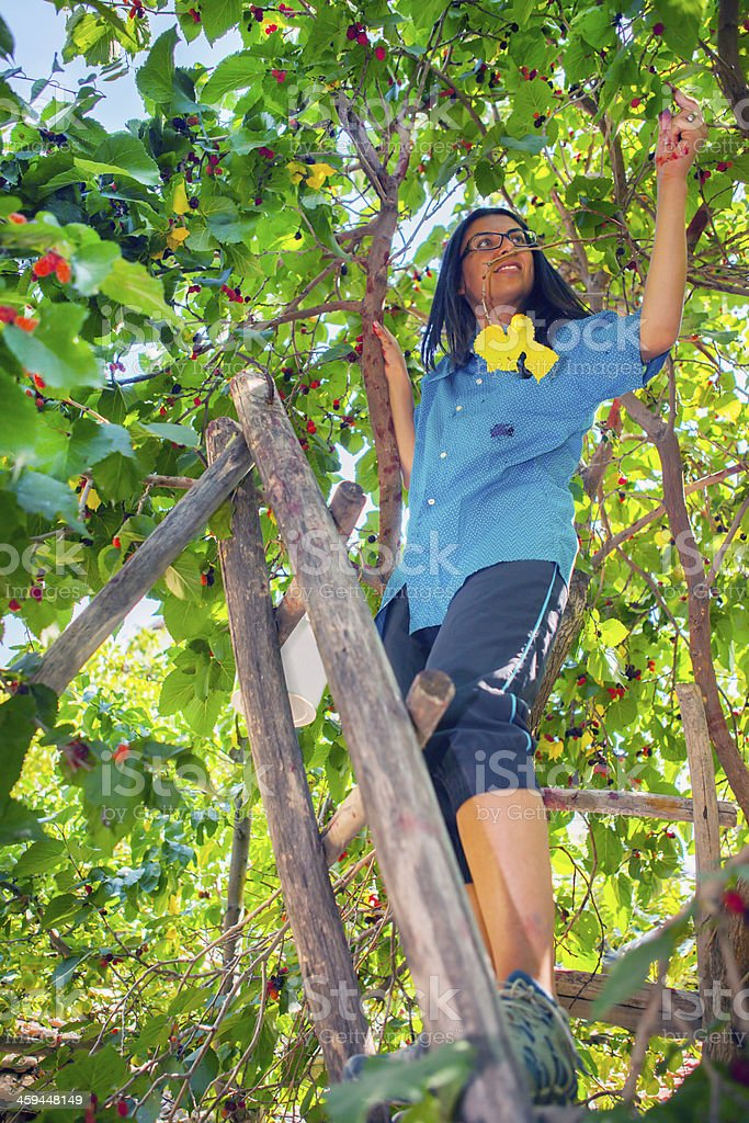 Woman pick up blackberry stock photo