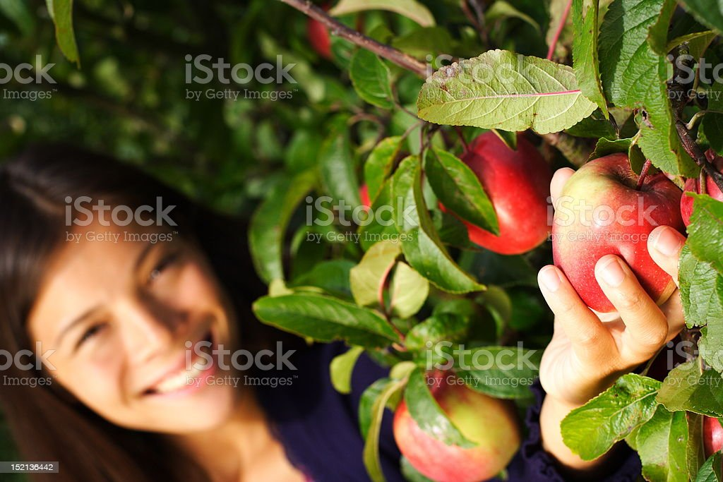 Woman picking apple from tree stock photo