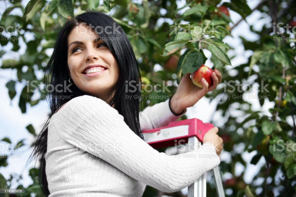 Woman picking apples royalty-free stock photo