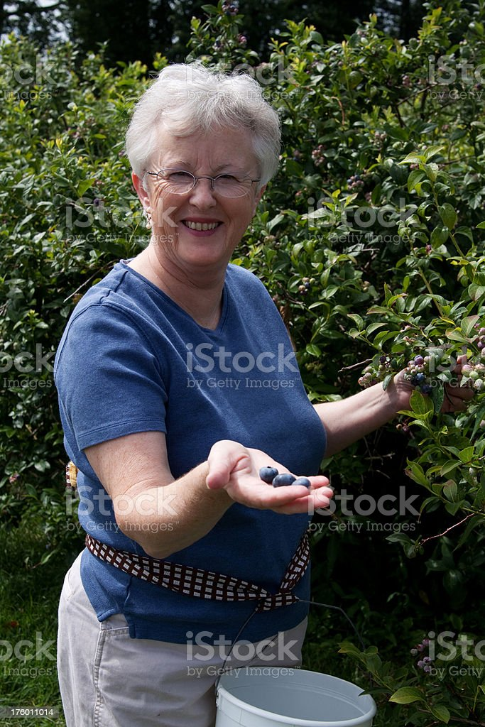 Woman Picking Blueberries royalty-free stock photo